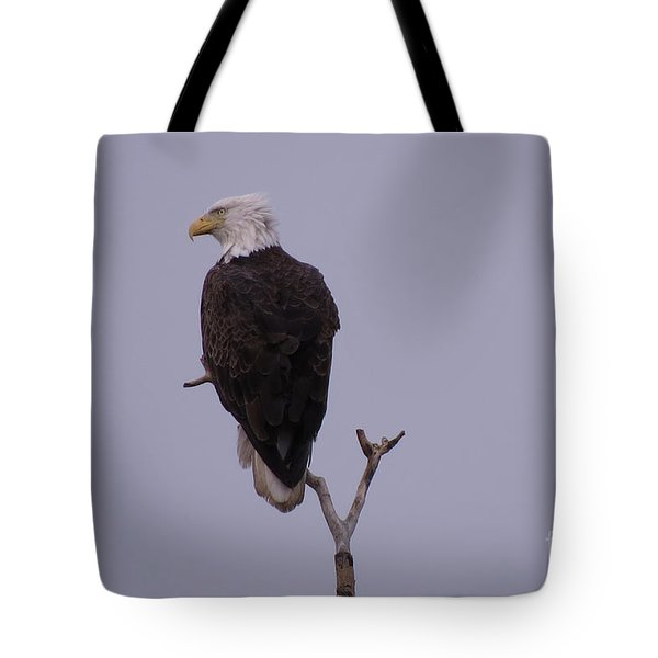Solo  Bald Eagle Tote Bag