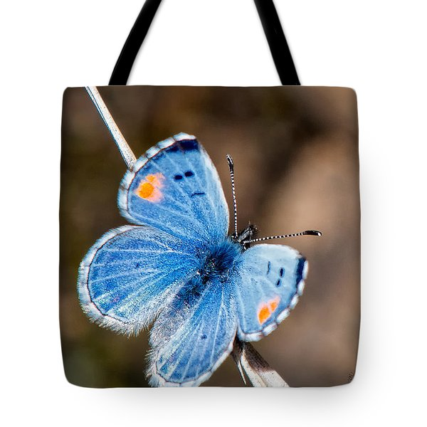 Sonoran Blue Tote Bag