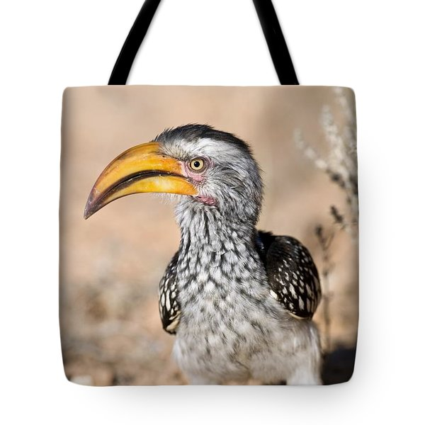Southern Yellow-billed Hornbill Tote Bag