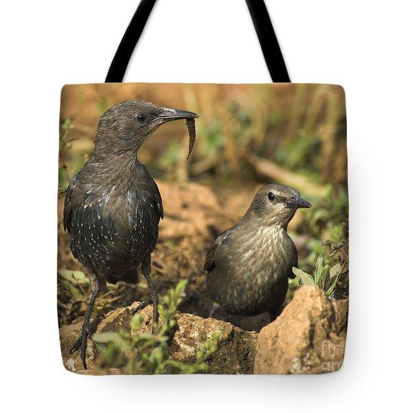Starling Estornino Tote Bag
