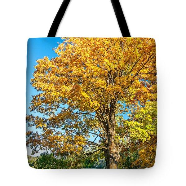 Sugar Maple 2 Tote Bag by Steve Harrington