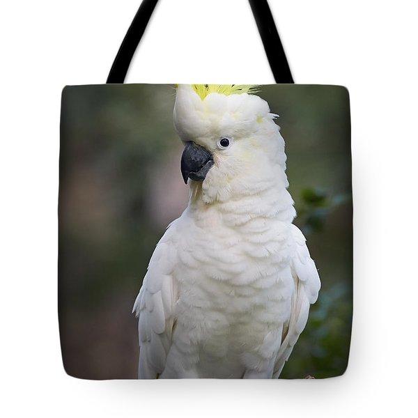 Sulphur-crested Cockatoo Displaying Tote Bag