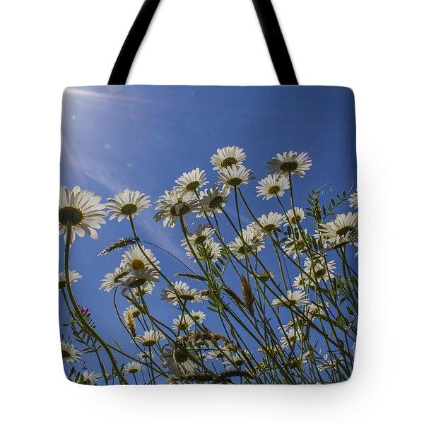 Sun Lit Daisies Tote Bag by Brian Roscorla