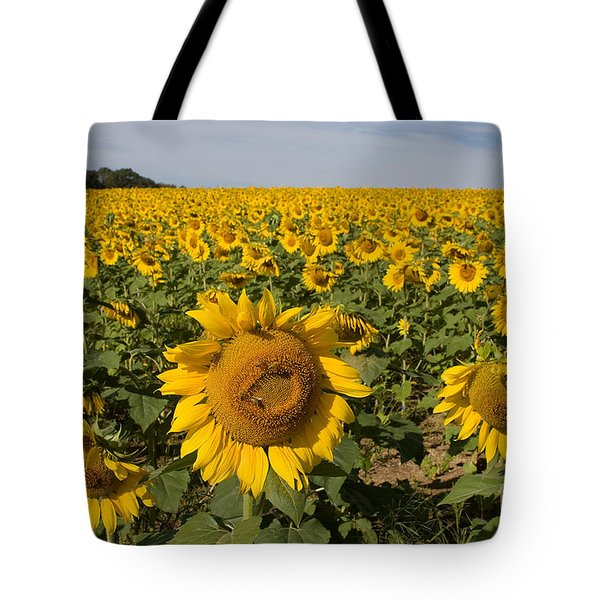 Tote Bag featuring the photograph Sunflower Fields by Chris Scroggins