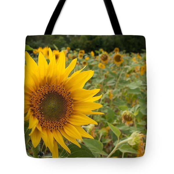 Sun Flower Fields Tote Bag by Miguel Winterpacht