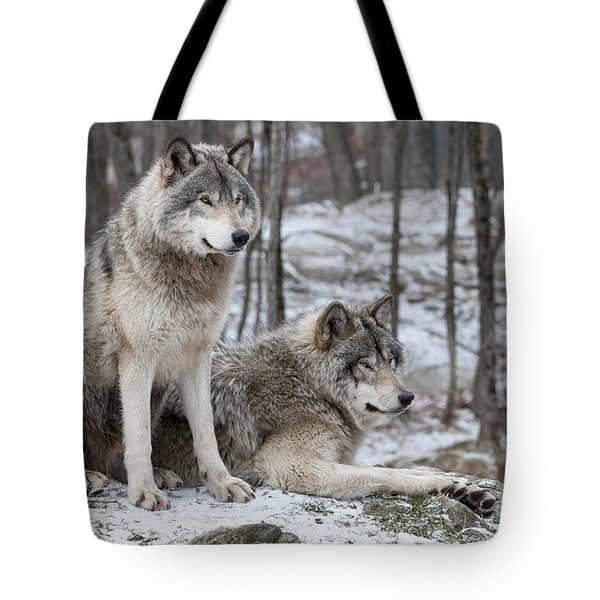 Timber Wolf Pair In Forest Tote Bag