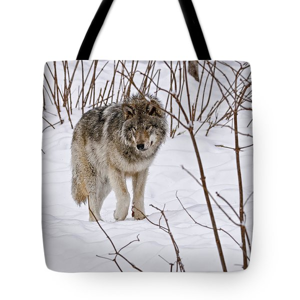 Tote Bag featuring the photograph Timber Wolf by Wolves Only
