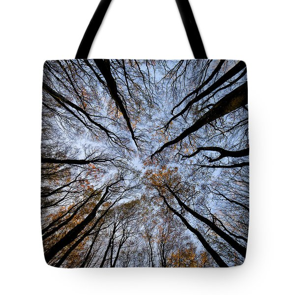 Tall Trees Tote Bag by Mike Santis