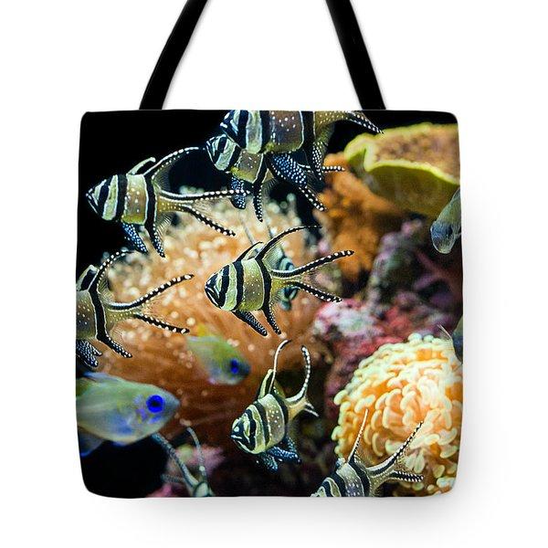 Tropical Wonderland - Banggai Cardinalfish Tote Bag by Jamie Pham