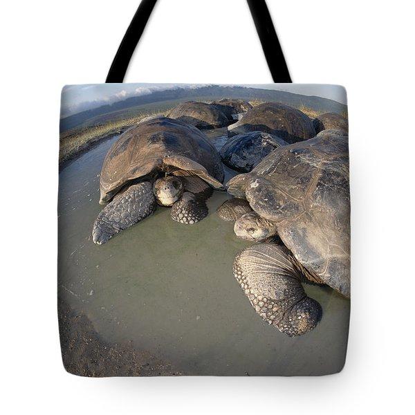 Volcan Alcedo Giant Tortoises Wallowing Tote Bag by Tui De Roy