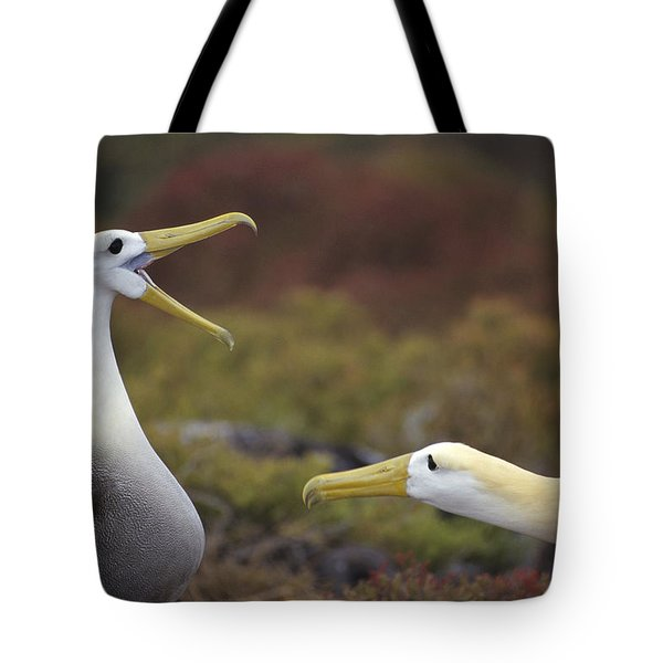 Waved Albatross Courtship Display Tote Bag by Tui De Roy