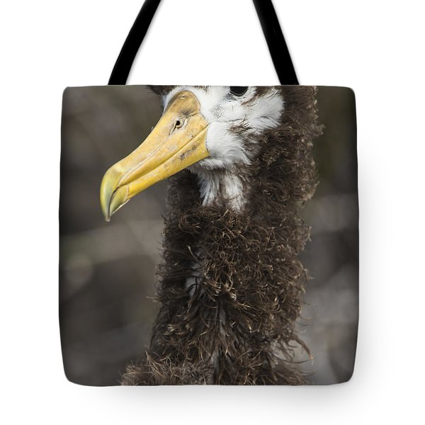 Waved Albatross Molting Juvenile Tote Bag