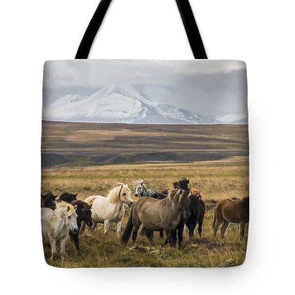 Wild Icelandic Horses Tote Bag
