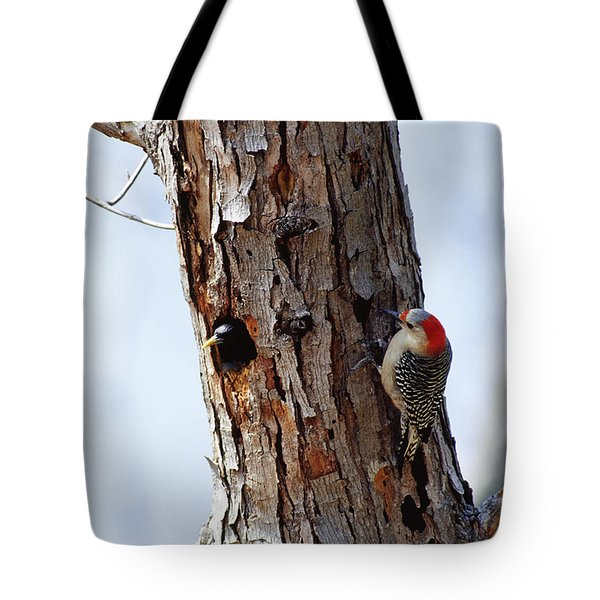 Woodpecker And Starling Fight For Nest Tote Bag