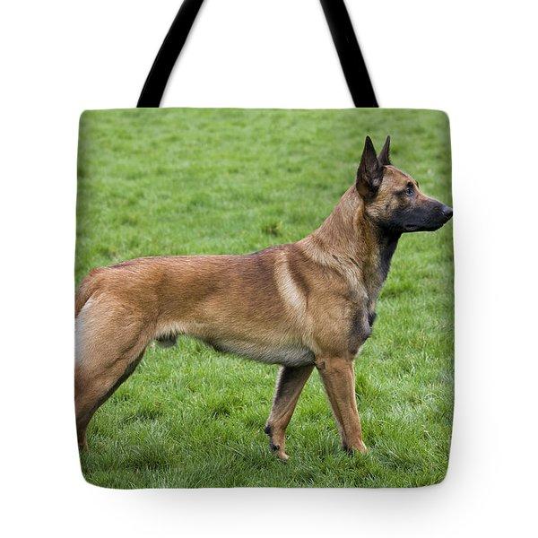 101130p020 Tote Bag