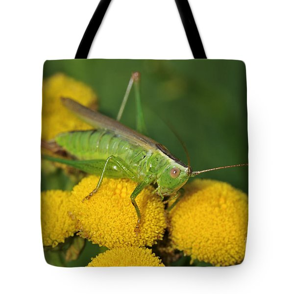 110221p244 Tote Bag by Arterra Picture Library