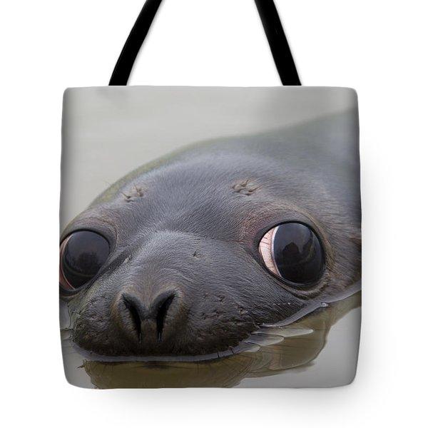 110714p127 Tote Bag
