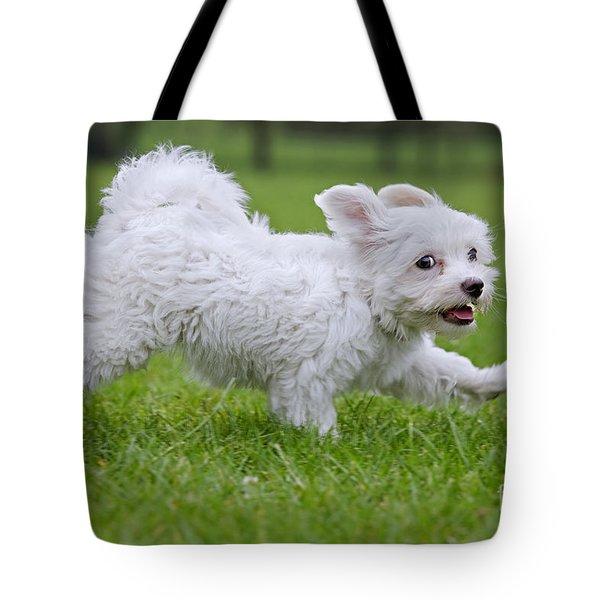 110801p130 Tote Bag