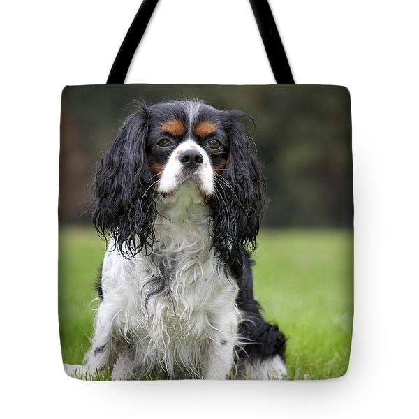 111216p255 Tote Bag