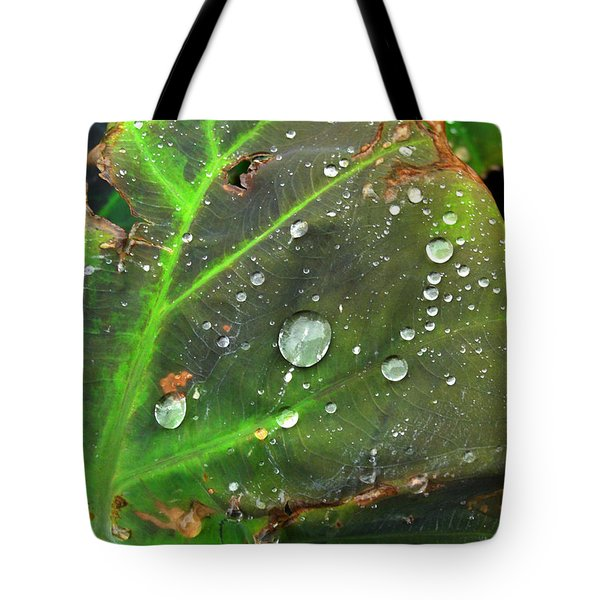 Untitled Tote Bag by Amy Williams
