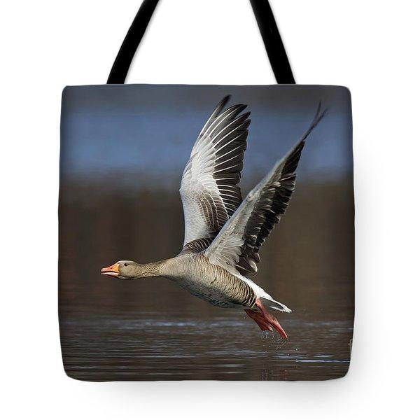 120223p134 Tote Bag