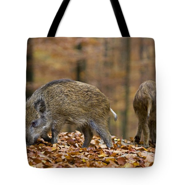 121213p274 Tote Bag by Arterra Picture Library