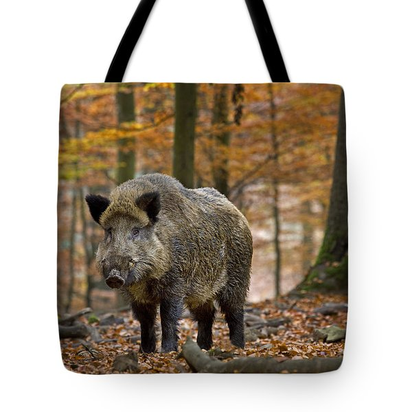Tote Bag featuring the photograph 121213p283 by Arterra Picture Library
