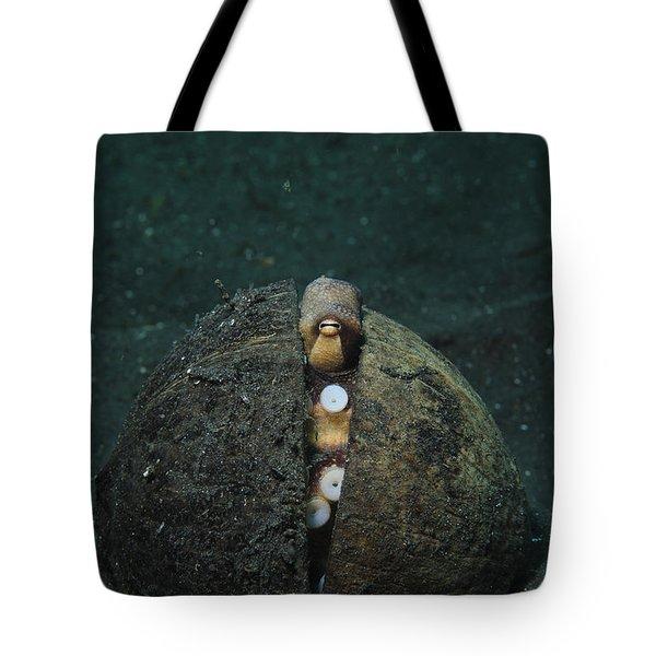 A Coconut Octopus, Lembeh Strait Tote Bag by Steve Jones