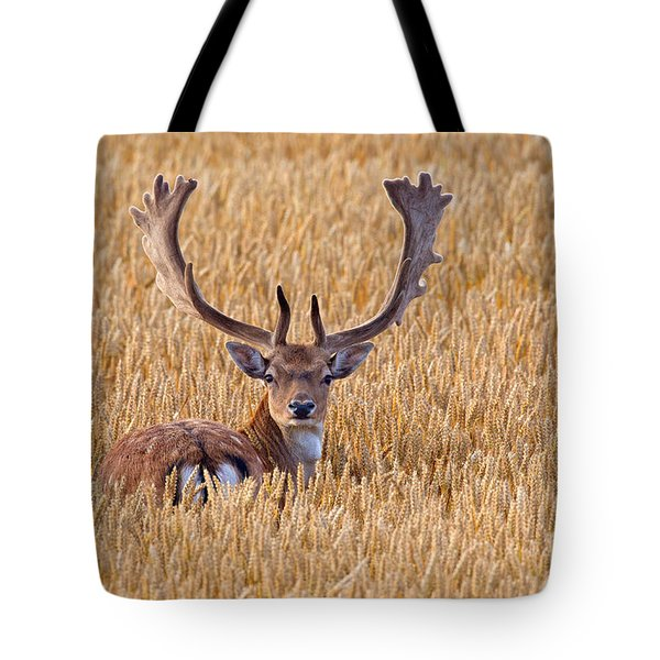 Tote Bag featuring the photograph 130201p293 by Arterra Picture Library