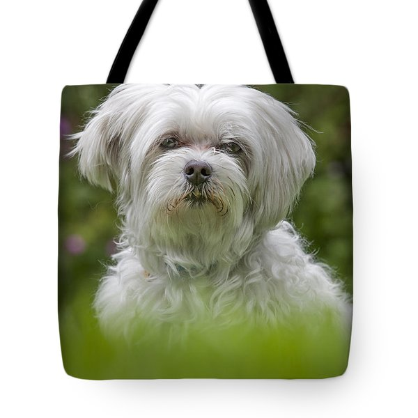 130918p024 Tote Bag by Arterra Picture Library