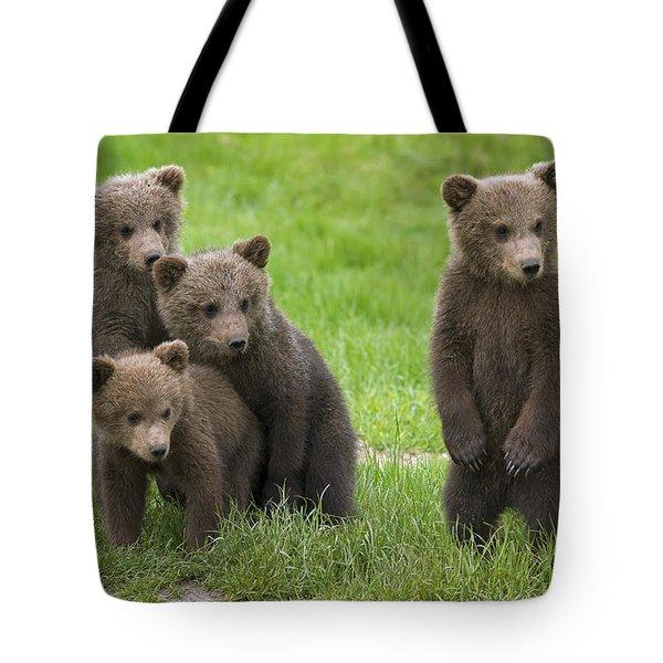 131018p260 Tote Bag