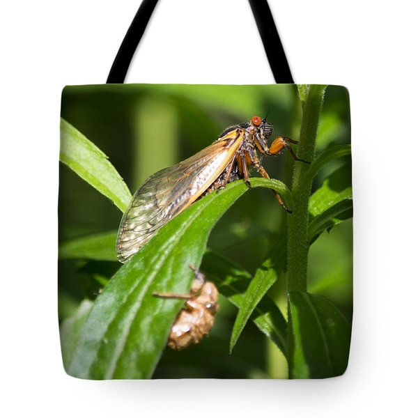 Tote Bag featuring the photograph 17 Year Itch by Rebecca Sherman