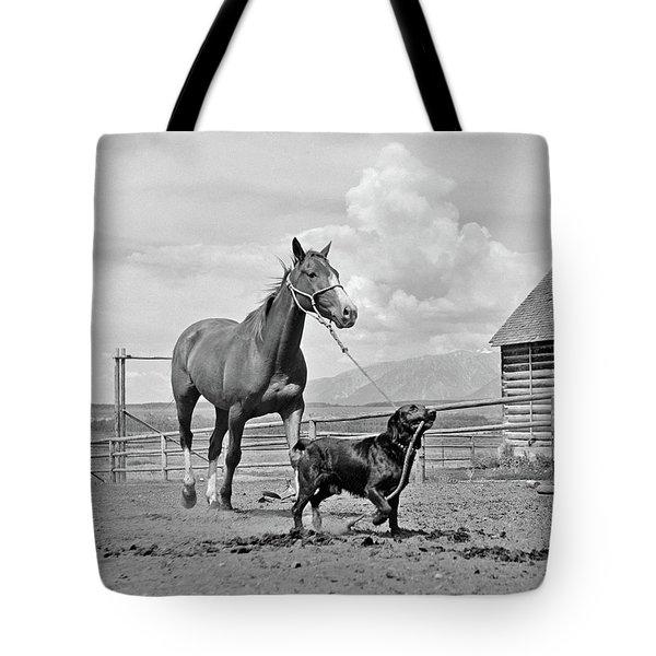 1950s 1960s Black Dog Leading Horse Tote Bag