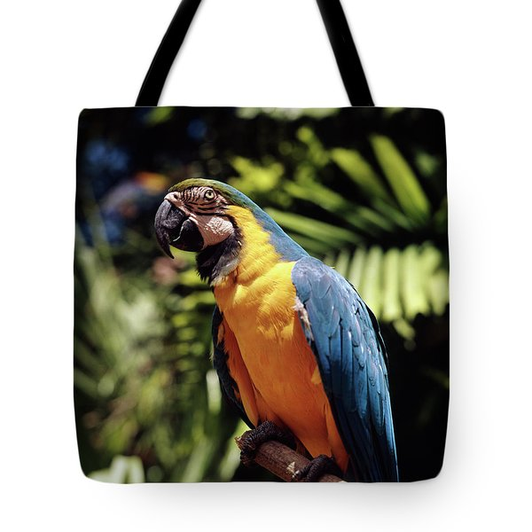 1960s Blue And Yellow Macaw Parrot Tote Bag