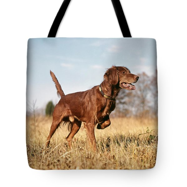 1960s Irish Setter Hunting Dog On Point Tote Bag