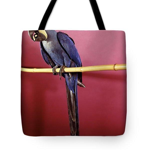1960s Purple Hyacinthine Macaw On Perch Tote Bag