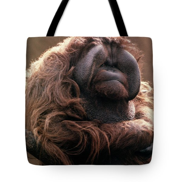 1970s Mature Adult Orangutan Pongo Tote Bag