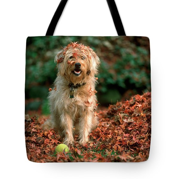 1980s Shaggy Beige And White Dog Tote Bag