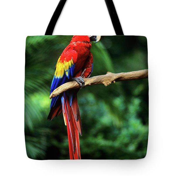 1990s Macaw Parrot Jungle Miami, Florida Tote Bag