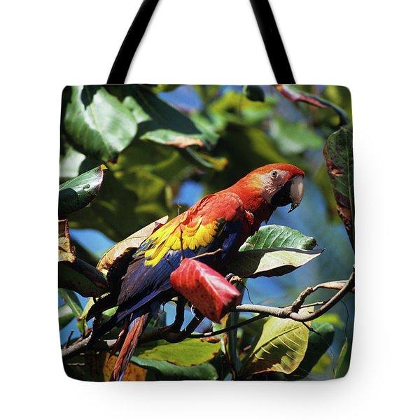 1990s Scarlet Macaw Ara Macao In Almond Tote Bag