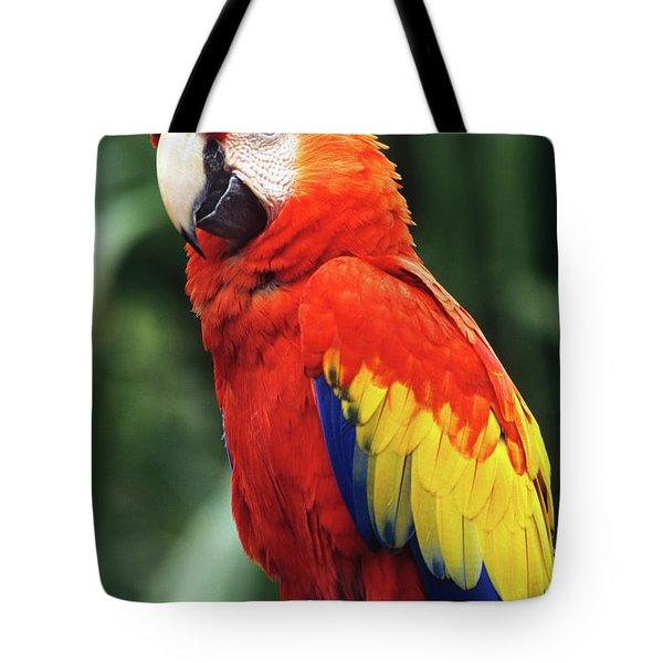 1990s Scarlet Macaw Ara Macao Looking Tote Bag