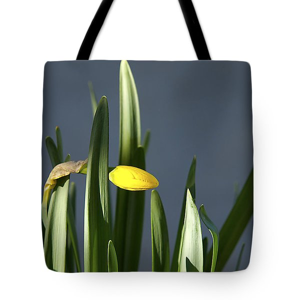 Tote Bag featuring the photograph 1st Daff by Joe Schofield
