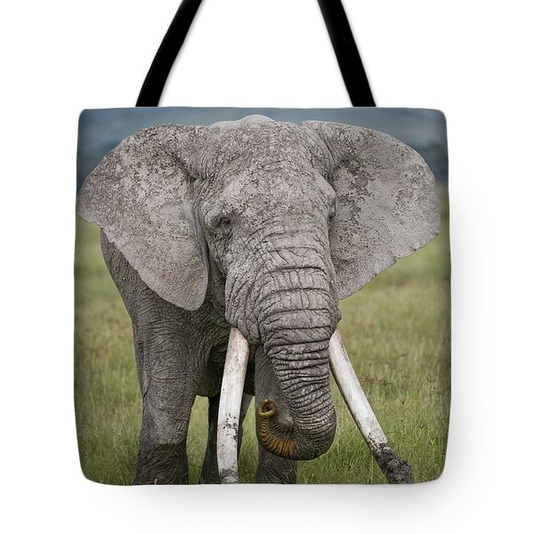 African Elephant Loxodonta Africana Tote Bag by Panoramic Images