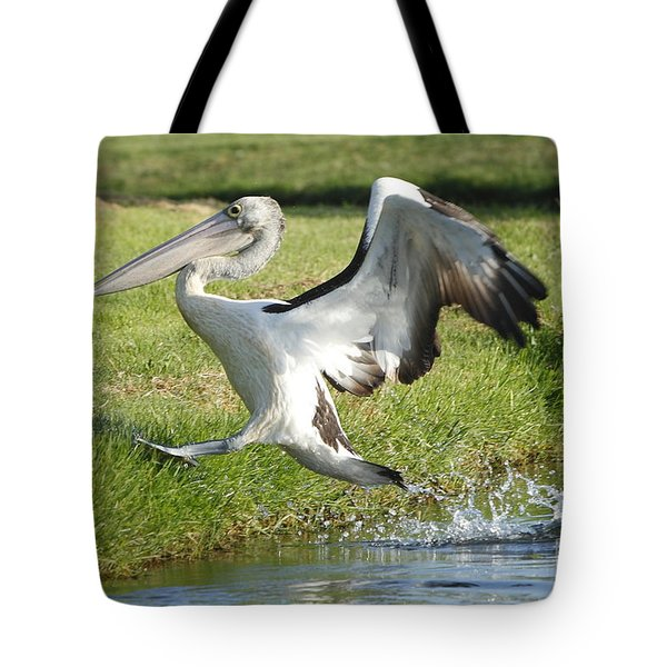 Australian Pelican Tote Bag by Craig Dingle