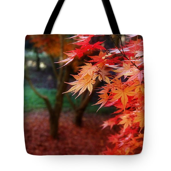 Autumnal Forest Tote Bag by Les Cunliffe