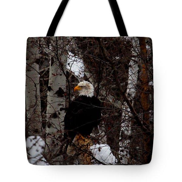 Bald Eagle Tote Bag by Omaste Witkowski