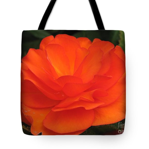 Tote Bag featuring the photograph Begonia Named Nonstop Apricot by J McCombie