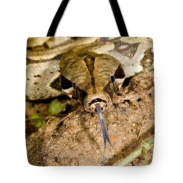 Boa Constrictor Tote Bag by Gregory G. Dimijian, M.D.