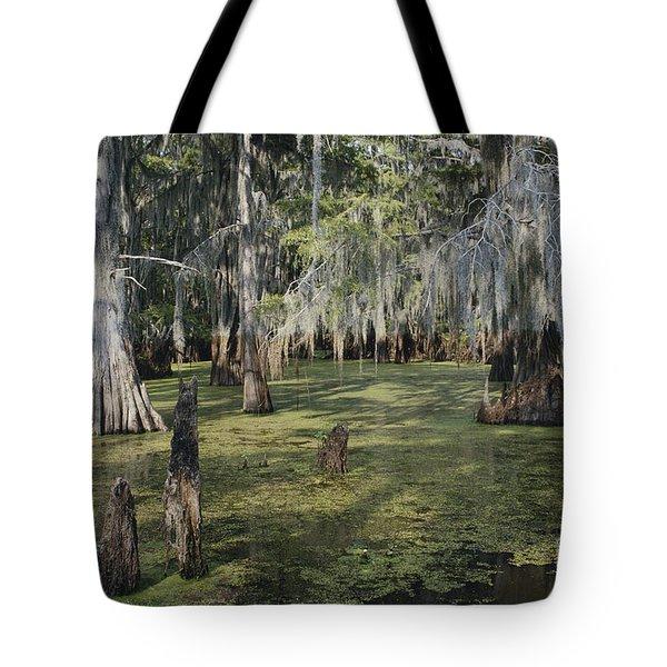 Caddo Lake, Texas Tote Bag