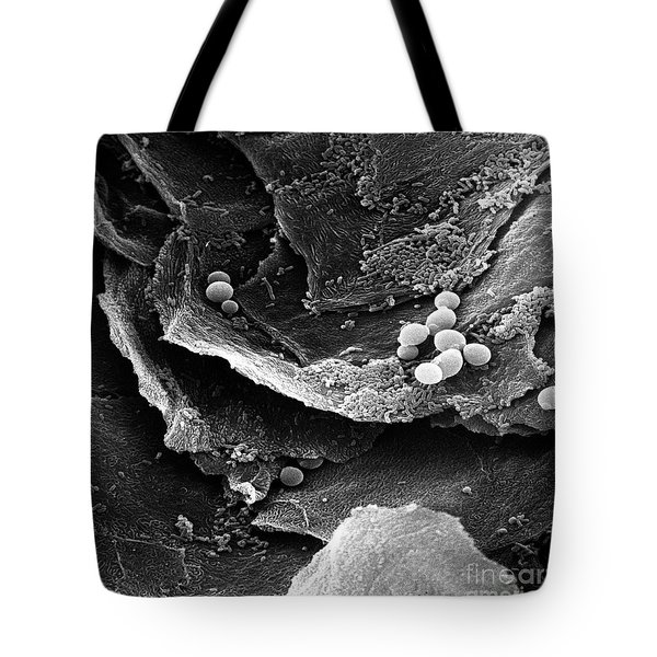Candida Tote Bag by David M. Phillips